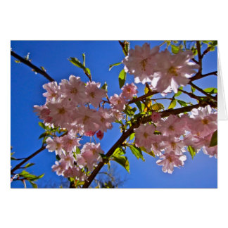 Cheery Cherry Blossoms Greeting Card