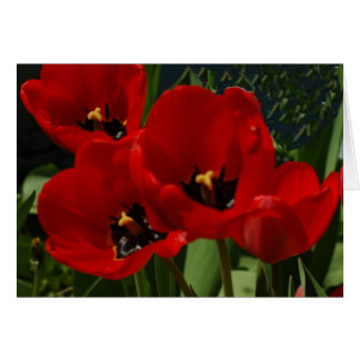 Cheery red tulips greeting card