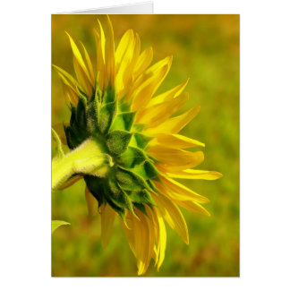 Cheery Sunflower Back Card