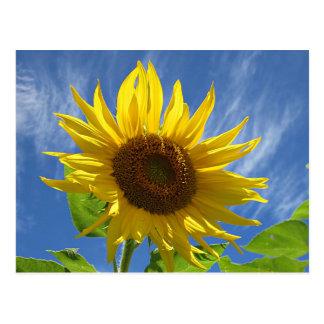 Cheery Sunflower Postcard