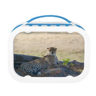 Cheeta Lunch Box