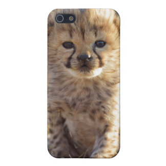 Cheetah 19 days old male cub iPhone 5 covers