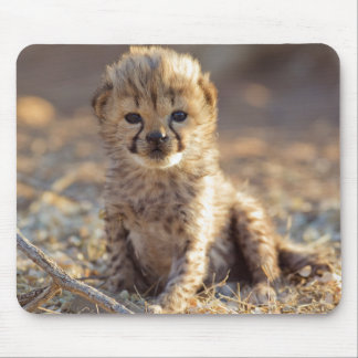 Cheetah 19 days old male cub mouse mat