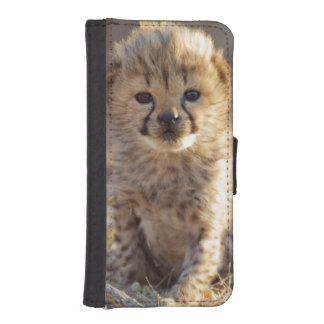 Cheetah 19 days old male cub