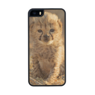 Cheetah 19 days old male cub wood iPhone SE/5/5s case