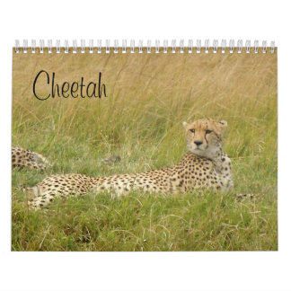 Cheetah 2008 calendars