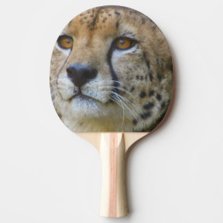 cheetah-21.jpg