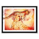 Cheetah 5x7 print photo print