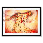 Cheetah 5x7 print photographic print