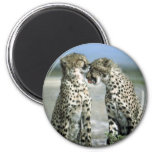 cheetah 6 cm round magnet