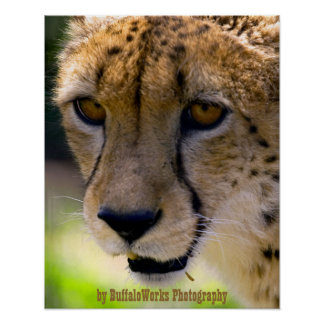 Cheetah 9120 print