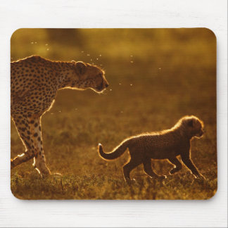 Cheetah (Acinonyx Jubatus) And Cub Walking Mouse Pad
