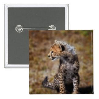 Cheetah (Acinonyx Jubatus) as seen in the Masai 2 15 Cm Square Badge