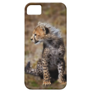 Cheetah (Acinonyx Jubatus) as seen in the Masai 2 iPhone 5 Covers