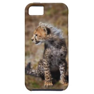 Cheetah (Acinonyx Jubatus) as seen in the Masai 2 iPhone 5 Case