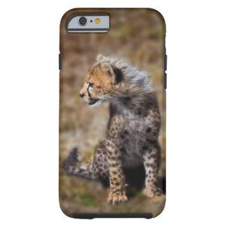 Cheetah (Acinonyx Jubatus) as seen in the Masai 2 Tough iPhone 6 Case
