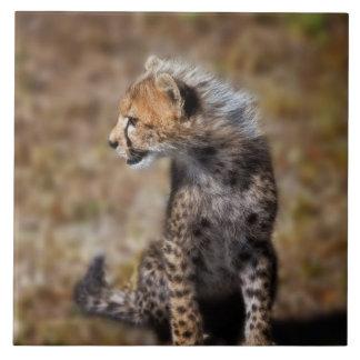 Cheetah (Acinonyx Jubatus) as seen in the Masai 2 Large Square Tile