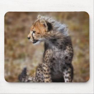 Cheetah Acinonyx Jubatus as seen in the Masai 2 Mousepads