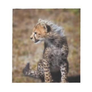 Cheetah (Acinonyx Jubatus) as seen in the Masai 2 Notepads