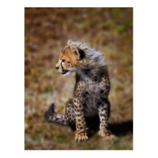 Cheetah (Acinonyx Jubatus) as seen in the Masai 2 Postcard