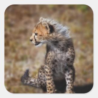 Cheetah (Acinonyx Jubatus) as seen in the Masai 2 Square Sticker
