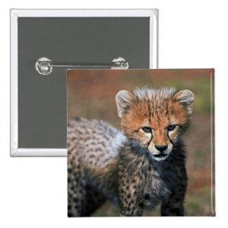 Cheetah (Acinonyx Jubatus) as seen in the Masai 3 15 Cm Square Badge