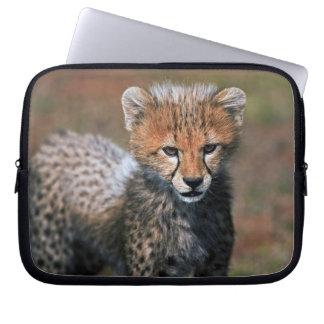 Cheetah (Acinonyx Jubatus) as seen in the Masai 3 Computer Sleeves