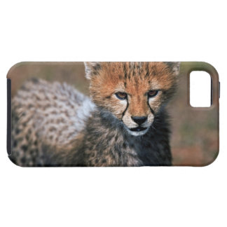 Cheetah (Acinonyx Jubatus) as seen in the Masai 3 iPhone 5 Case