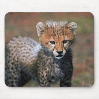 Cheetah (Acinonyx Jubatus) as seen in the Masai 3 Mouse Pad