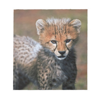 Cheetah (Acinonyx Jubatus) as seen in the Masai 3 Notepad