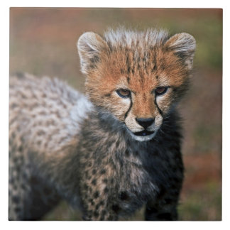 Cheetah (Acinonyx Jubatus) as seen in the Masai 3 Large Square Tile