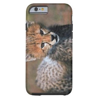 Cheetah (Acinonyx Jubatus) as seen in the Masai 3 Tough iPhone 6 Case