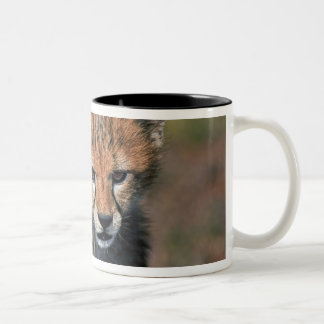 Cheetah (Acinonyx Jubatus) as seen in the Masai 3 Two-Tone Coffee Mug