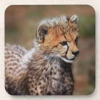 Cheetah Acinonyx Jubatus as seen in the Masai Coaster