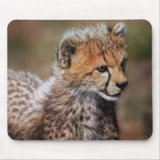 Cheetah Acinonyx Jubatus as seen in the Masai Mousepads