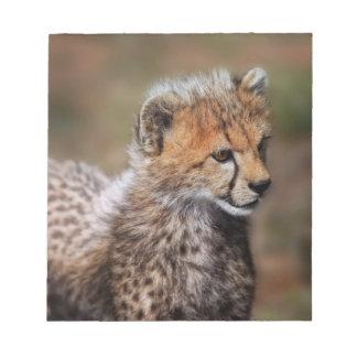 Cheetah (Acinonyx Jubatus) as seen in the Masai Notepad