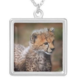 Cheetah (Acinonyx Jubatus) as seen in the Masai Silver Plated Necklace