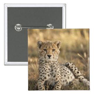 Cheetah, Acinonyx jubatus, cub laying downin 15 Cm Square Badge