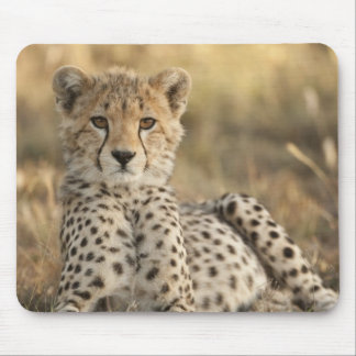 Cheetah Acinonyx jubatus cub laying downin Mouse Pads