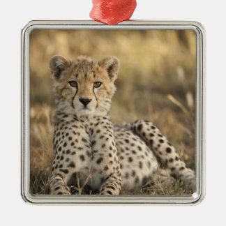 Cheetah, Acinonyx jubatus, cub laying downin Silver-Colored Square Decoration