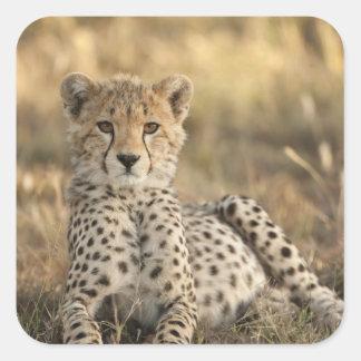Cheetah, Acinonyx jubatus, cub laying downin Sticker
