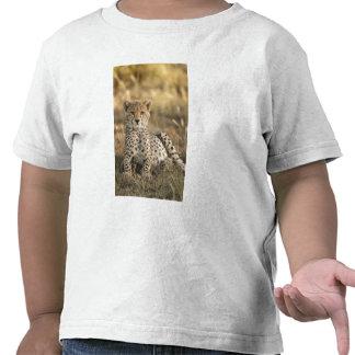 Cheetah, Acinonyx jubatus, cub laying downin Shirts