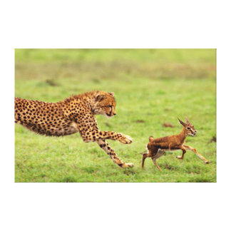 Cheetah (Acinonyx Jubatus) Cub Practicing Canvas Print