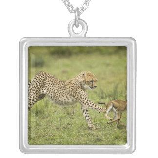 Cheetah, Acinonyx jubatus, cubs hunting and Silver Plated Necklace