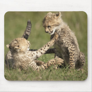 Cheetah Acinonyx jubatus cubs playing in the Mouse Pad
