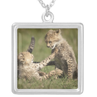 Cheetah, Acinonyx jubatus, cubs playing in the Silver Plated Necklace