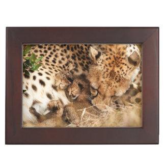 Cheetah (Acinonyx Jubatus) Grooming One-Day Old Memory Boxes