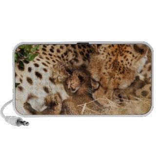 Cheetah (Acinonyx Jubatus) Grooming One-Day Old Notebook Speaker