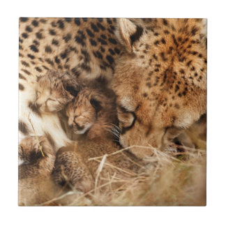 Cheetah (Acinonyx Jubatus) Grooming One-Day Old Small Square Tile