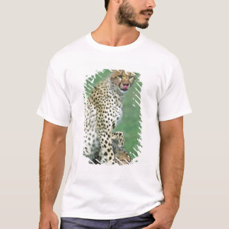 Cheetah Acinonyx jubatus) Grown cubs eating T-Shirt